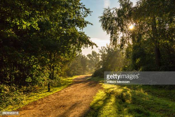 sunlight - william mevissen stockfoto's en -beelden