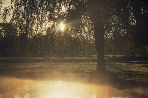 Sunlight piercing through a beautiful Weeping Willow at Dawn, when travelling across France - gettyimageskorea