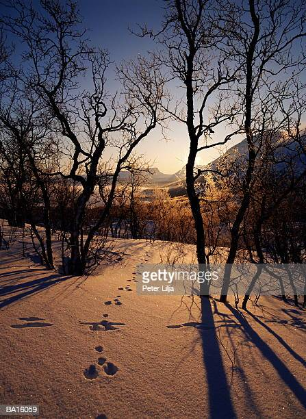 Sunlight shining on animal tracks in snow