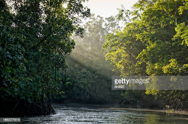 Sunlight shining through trees on river in Amazon rainforest