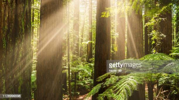 Sunlight sneaking through forest.