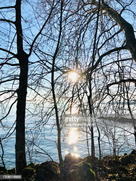 "sunlight streaming through bare trees against bright sun - ""jörg peters"" stock-fotos und bilder"