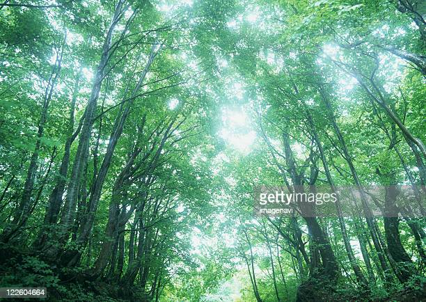 sunlight streaming through the leaves of trees - 山形県 ストックフォトと画像