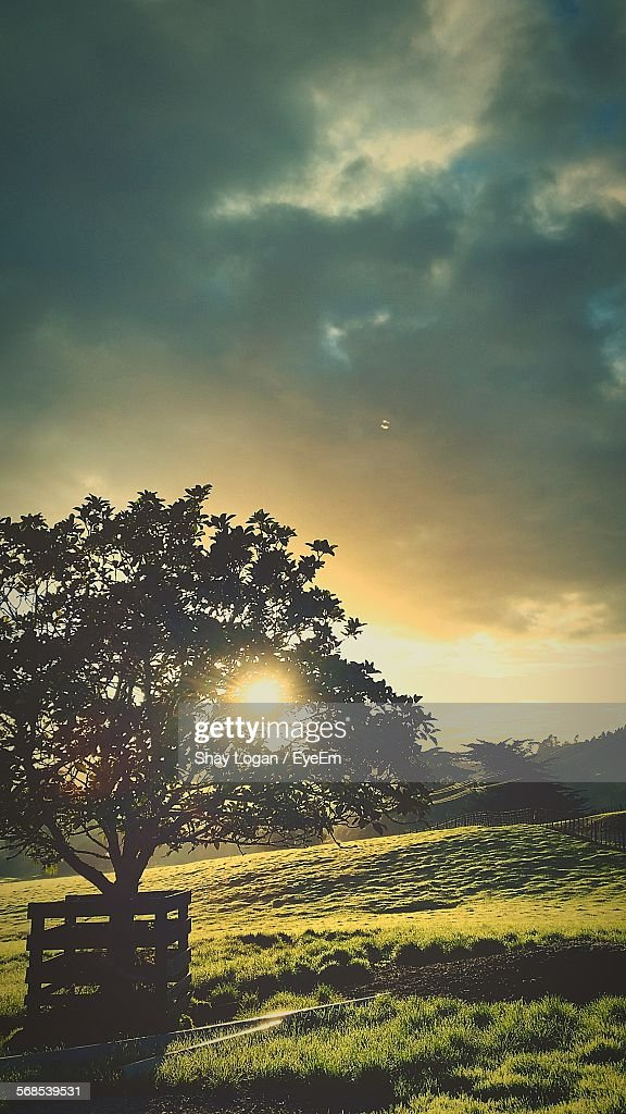 Sunlight Streaming Through Tree On Field Against Cloudy Sky : Stock Photo