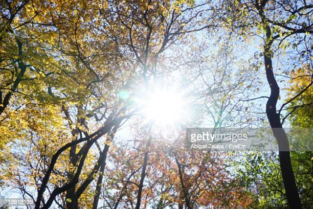 Sunlight Streaming Through Trees Against Sky