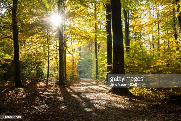 sunlight streaming through trees in forest - bielefeld stock pictures, royalty-free photos & images