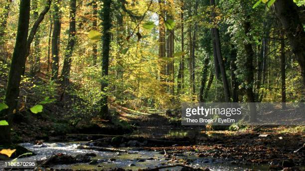 sunlight streaming through trees in forest - aachen stock pictures, royalty-free photos & images