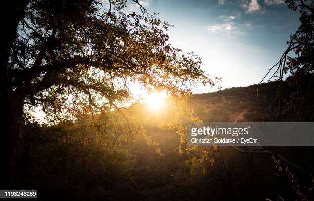 sunlight streaming through trees in forest - christian soldatke stock pictures, royalty-free photos & images