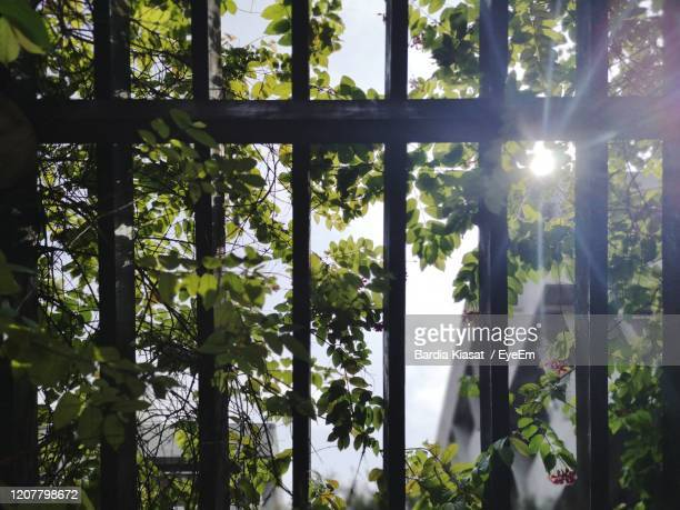 sunlight streaming through trees in forest - prison stock pictures, royalty-free photos & images
