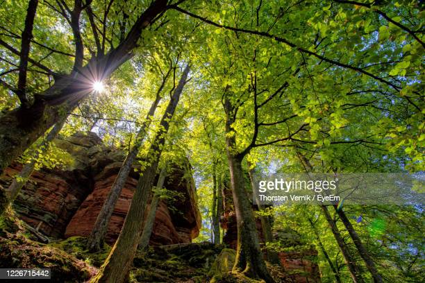 sunlight streaming through trees in forest - animals in the wild stock pictures, royalty-free photos & images