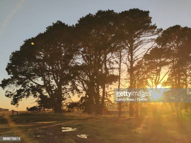 sunlight streaming through trees on field against sky during sunset - back lit stock pictures, royalty-free photos & images