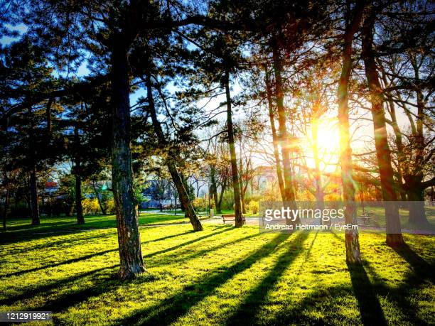 sunlight streaming through trees on landscape - andreas solar stock pictures, royalty-free photos & images