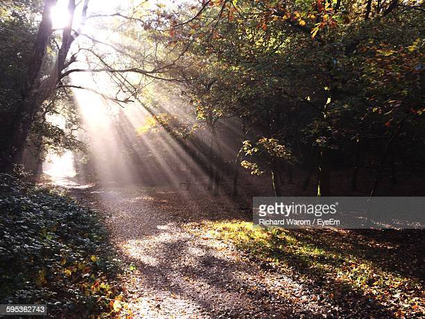 sunlight streaming through trees - sutton coldfield stock photos and pictures