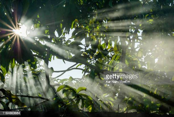sunlight streaming through wet tree during rainy season - west kalimantan stock pictures, royalty-free photos & images