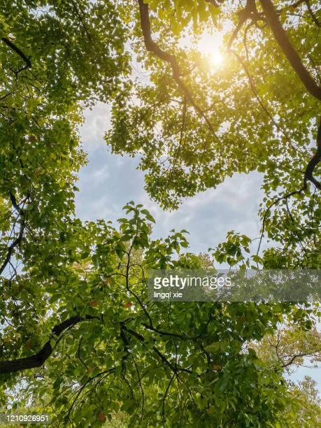sunlight through the canopy - cima di albero foto e immagini stock