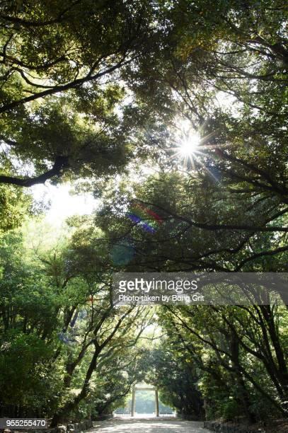 sunlight through the forest - 日本の神社 ストックフォトと画像