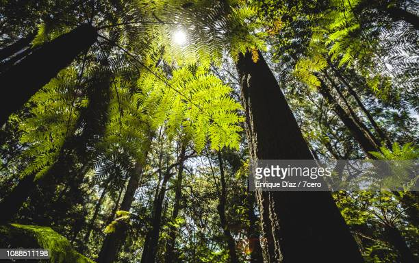 Sunlight through the trees and ferns in Binna Burra