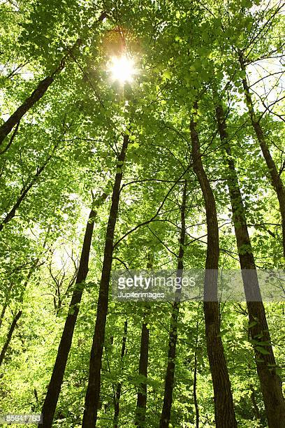 Sunlight through the trees in the Ozark National Forest
