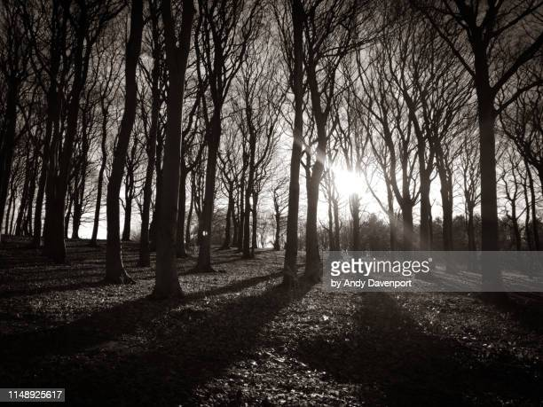 sunlight through the trees - dawn davenport stock photos and pictures