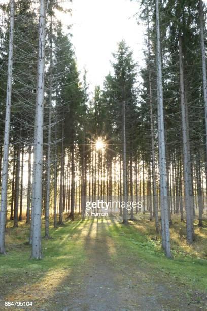 Sunlight through the woods