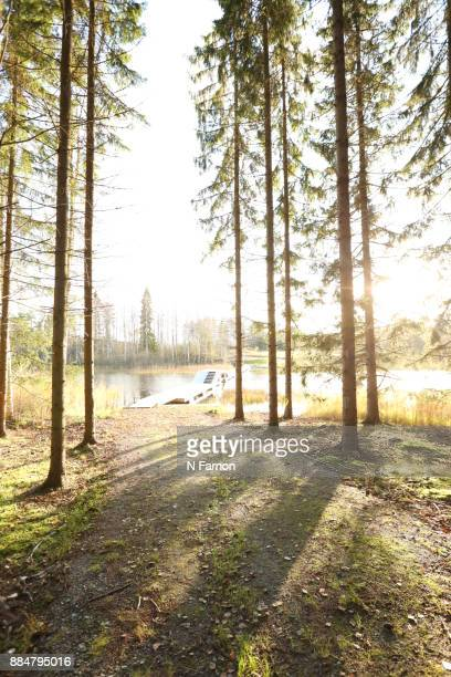 Sunlight through the woods with  wooden walkway