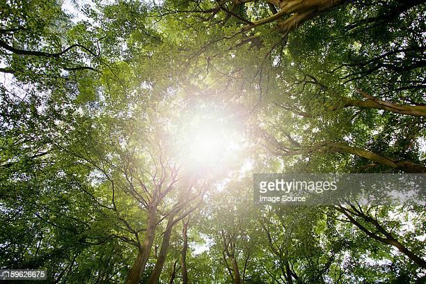 Sunlight through tree canopy