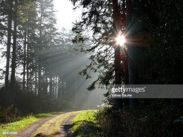 sunlight through trees in forest - tobias gaulke stock-fotos und bilder