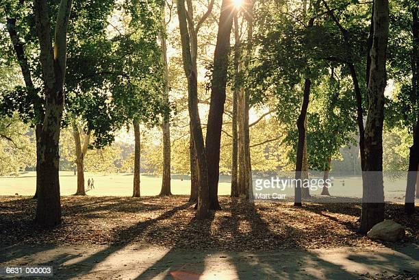 sunlight through trees in park - プロスペクト公園 ストックフォトと画像