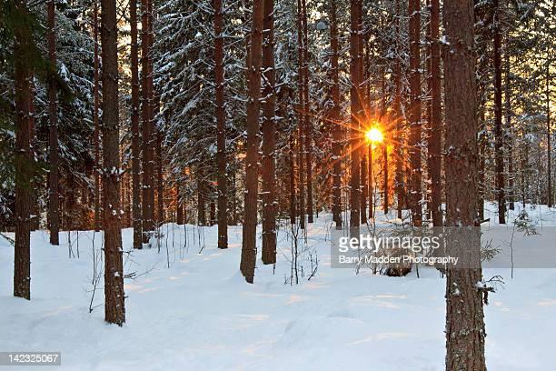 sunlight through trees - ラッペーンランタ ストックフォトと画像
