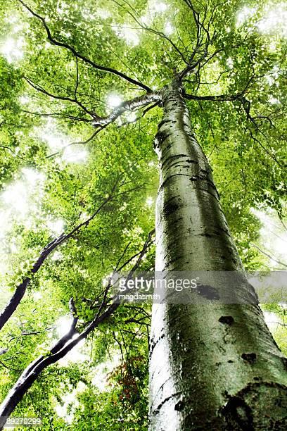 光からの木