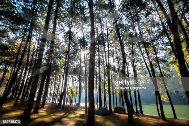 Sunlight with green forest, Pang ung,  Mae hong son, Thailand