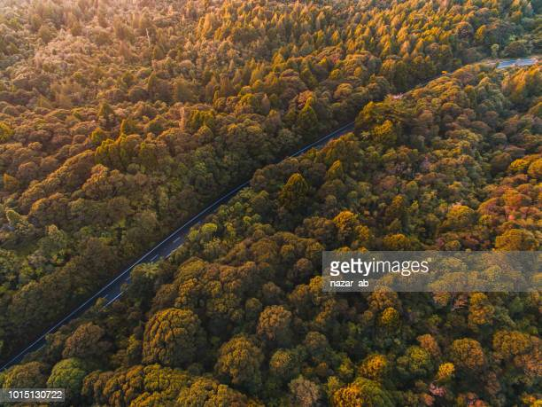 Sunlit aerial view of road cutting through forest.