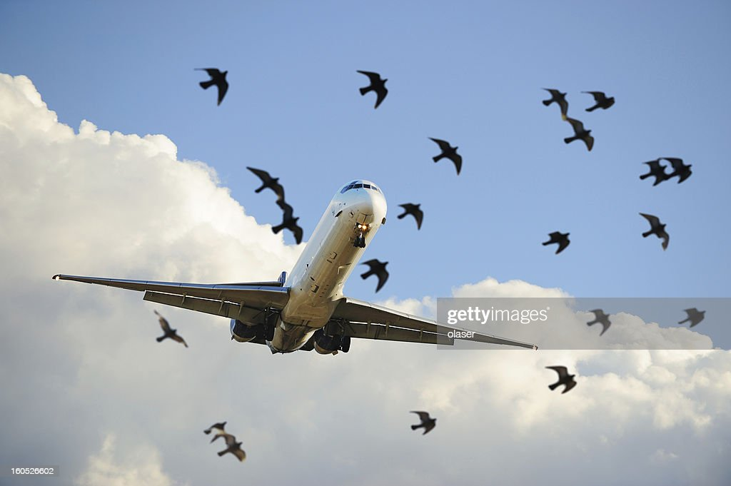 Sunlit airplane taking off, birds close up : Stock Photo