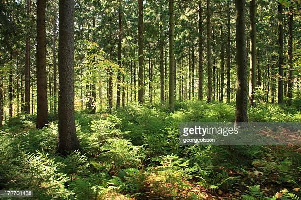 Forêt ensoleillé intérieur