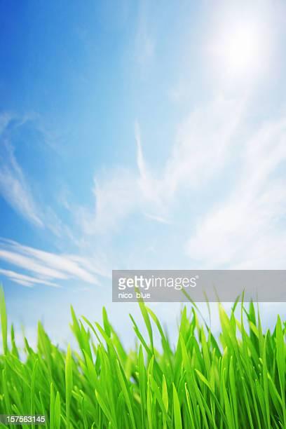 Sunlit grassy field