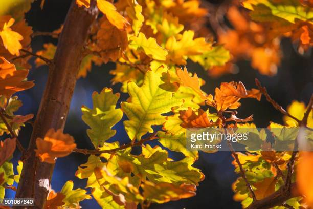 Sunlit leaves in bright colors
