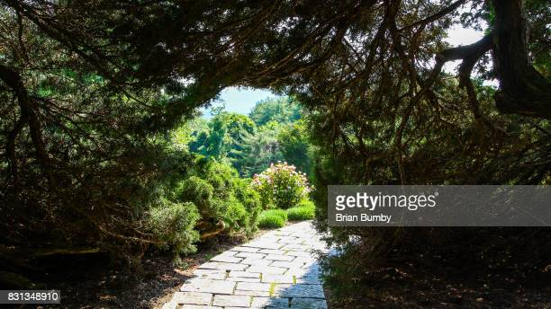 Sunlit path through garden hedges