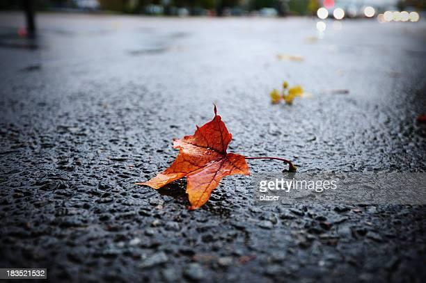 illuminato da luce naturale di pioggia su asfalto bagnato foglia di autunno - novembre foto e immagini stock