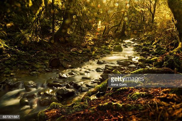 Sunlit stream in mossy forest, Portland, Oregon