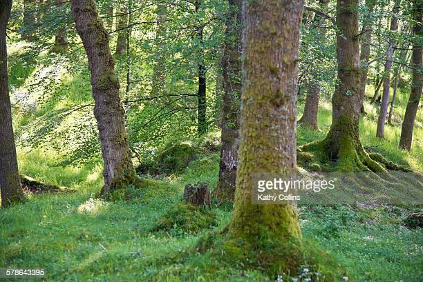 Sunlit summer woodland interior