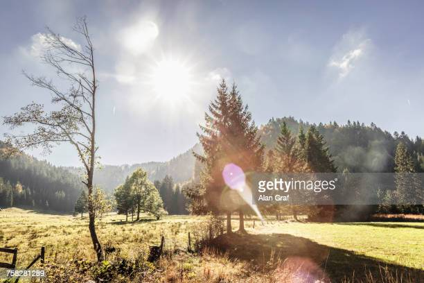 Sunlit valley and forest, Bavaria, Germany