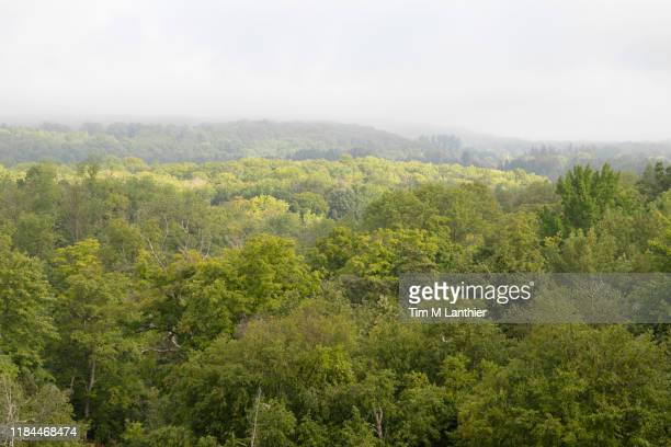 sunlit valley with fog over tree canopy and horizon - hill range stock pictures, royalty-free photos & images