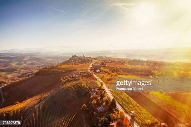 Sunlit view from hot air balloon of rolling landscape and autumn vineyards, Langhe, Piedmont, Italy