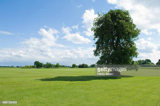 Sunlit view of green fields and tree