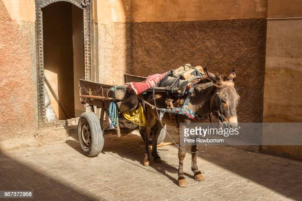 sunlit working donkey - donkey stock pictures, royalty-free photos & images