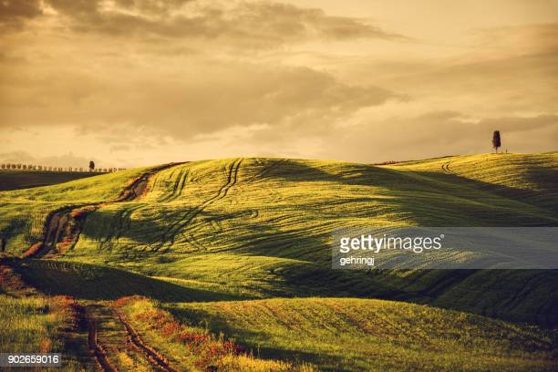 sunny afternoon in tuscany - chianti region stock photos and pictures
