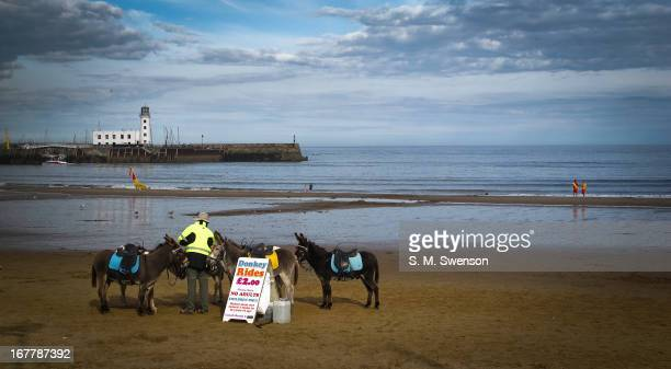 Sunny August afternoon on the beach in Scarborough, North Yorkshire, England. The beach is nearly empty except for three donkeys, their owner and two...