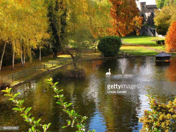 CONTENT] Sunny Autumn afternoon at pond in park with ducks and swan in historic spa town Bad Wimpfen BadenWürttemberg Germany The historical old part...