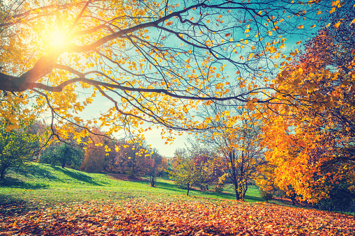 Sunny autumn in countryside 1036404942