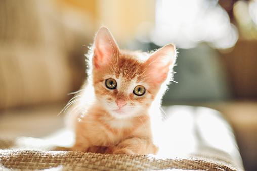 Sunny cat 508030340